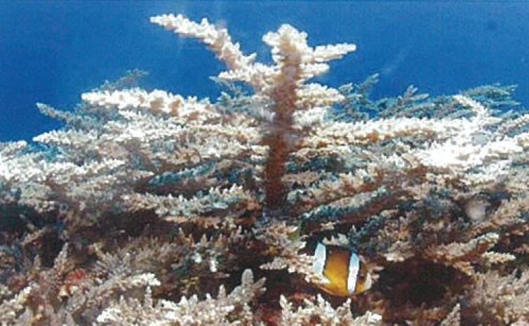 高次元エネルギーが働く化石サンゴ
